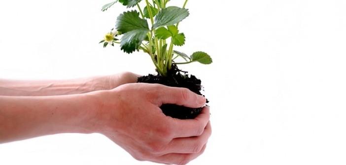 man planting a flower